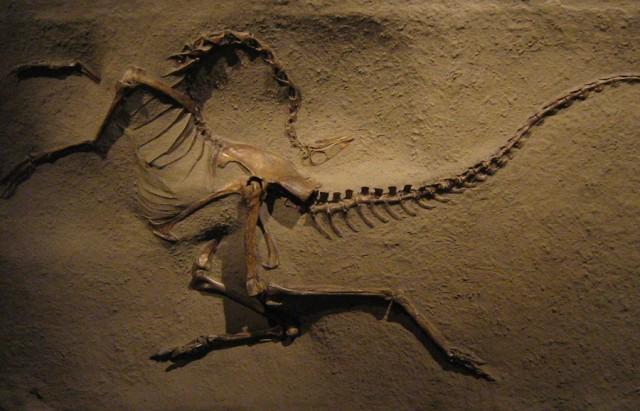 ornithomimus1-640x411
