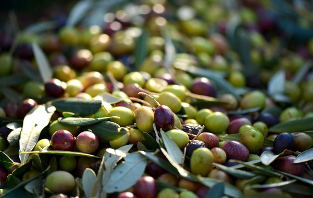 olive-tunisie